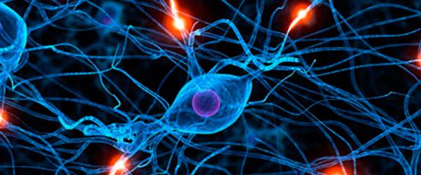 8 curiosidades sobre las neuronas